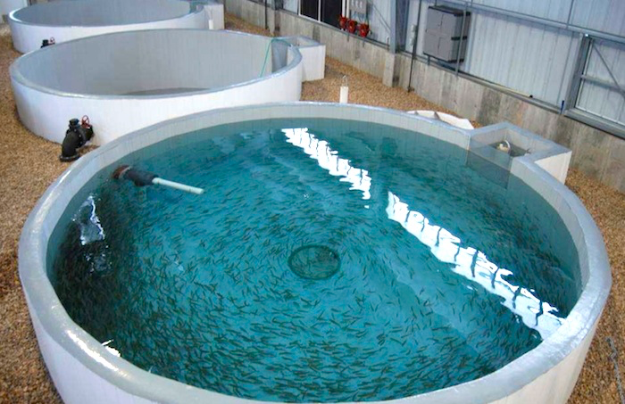 The Seafood Industry and HydroSil PRO